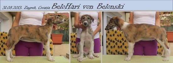 BeloHari Von Belonski