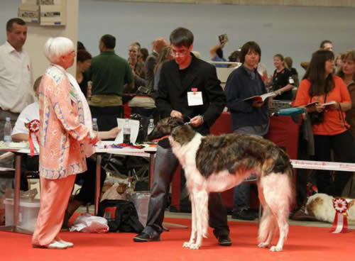 World dog Show, Herning, 25. 06. 2010.